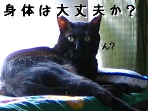 Img_1741jpg1