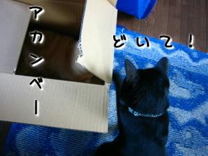 Img_0414jpg1
