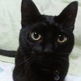 黒猫ラプー