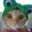 カエルだゲロ!