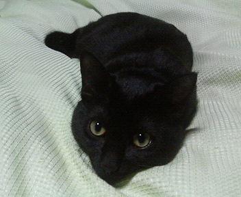 黒猫のかたまり